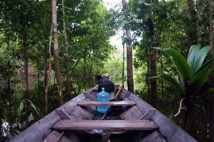 Bresil Manaus Jungle 142