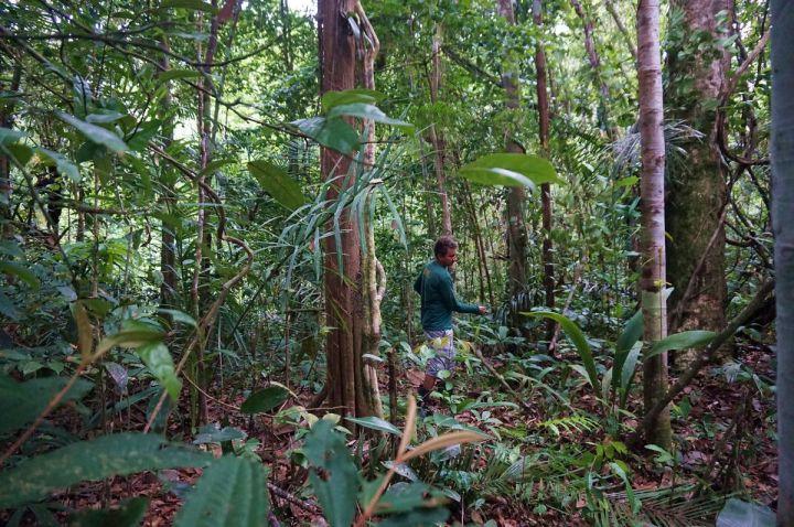 Bresil Manaus Jungle 144