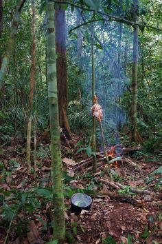 Bresil Manaus Jungle 150