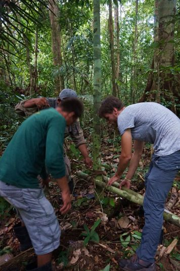 Bresil Manaus Jungle 155