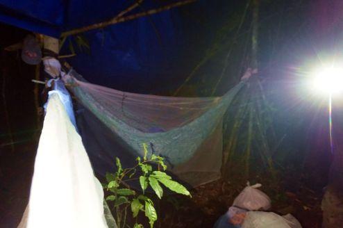 Bresil Manaus Jungle 160