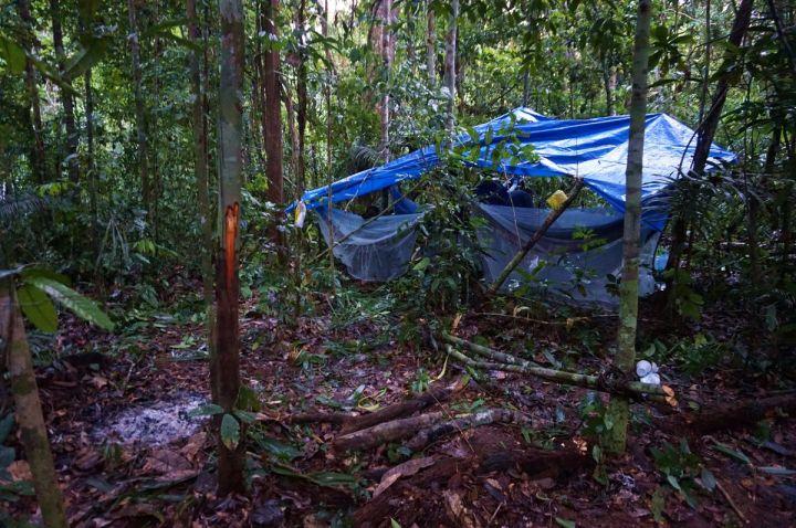 Bresil Manaus Jungle 162