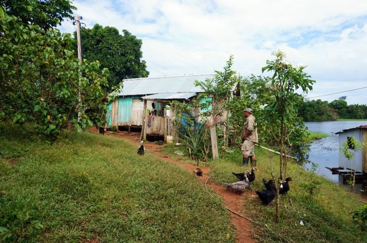 Bresil Manaus Jungle 170