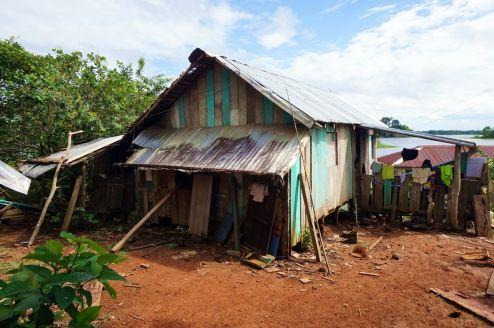 Bresil Manaus Jungle 174