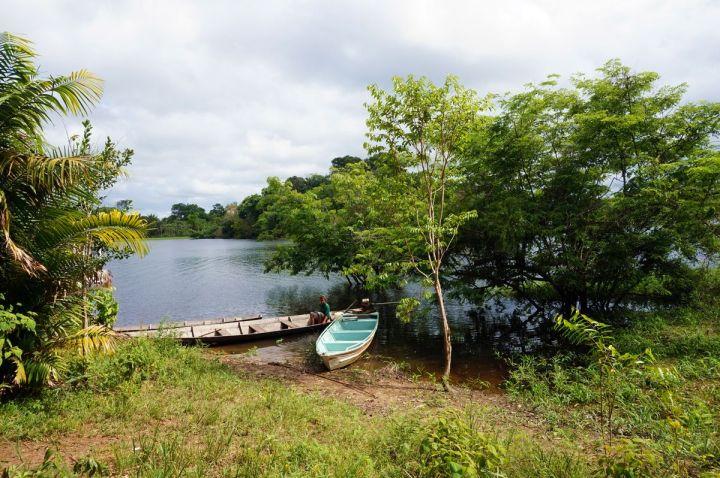 Bresil Manaus Jungle 181