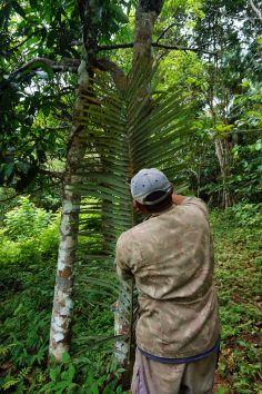 Bresil Manaus Jungle 184