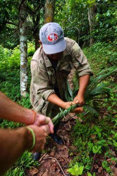 Bresil Manaus Jungle 185