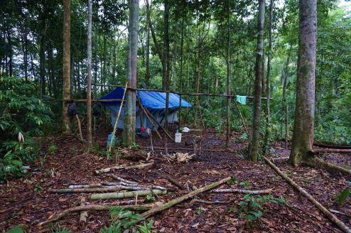 Bresil Manaus Jungle 22