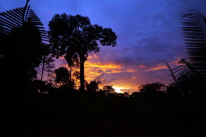 Bresil Manaus Jungle 24