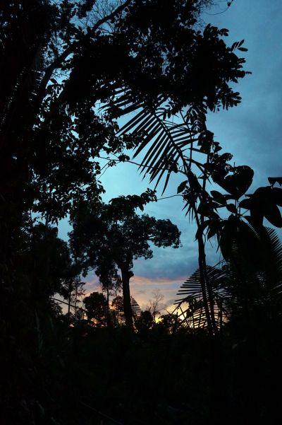 Bresil Manaus Jungle 27