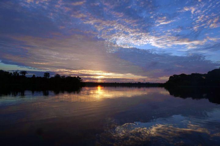 Bresil Manaus Jungle 33