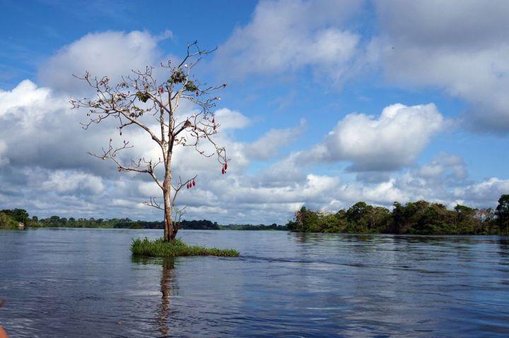 Bresil Manaus Jungle 38