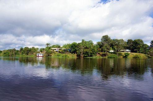 Bresil Manaus Jungle 40