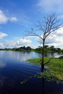 Bresil Manaus Jungle 43