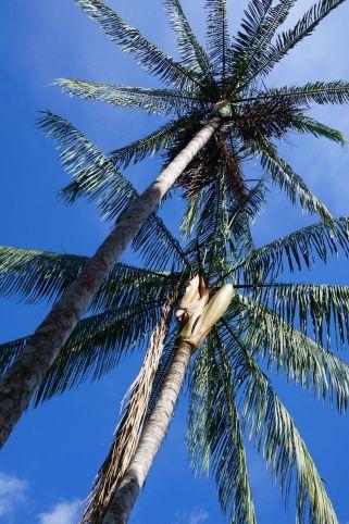 Bresil Manaus Jungle 45