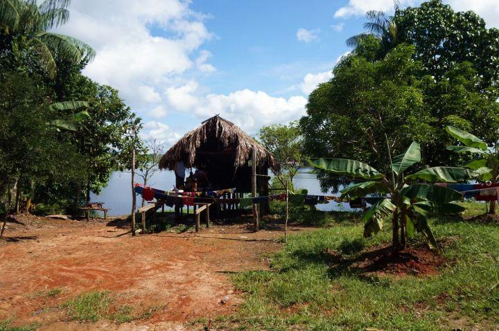 Bresil Manaus Jungle 50