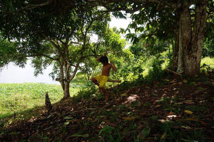 Bresil Manaus Jungle 54