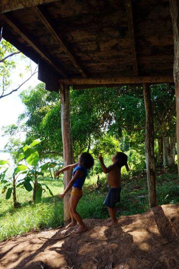 Bresil Manaus Jungle 60