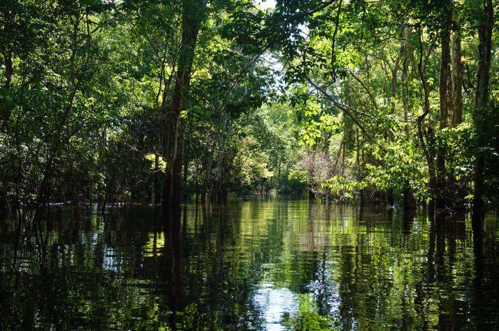 Bresil Manaus Jungle 68