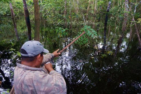 Bresil Manaus Jungle 78