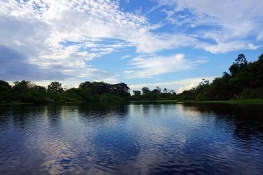 Bresil Manaus Jungle 84
