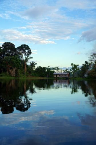 Bresil Manaus Jungle 93