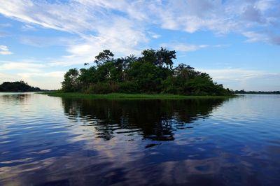 Bresil Manaus Jungle 94