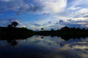 Bresil Manaus Jungle 98
